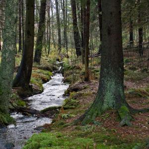 skog-bertil-runström