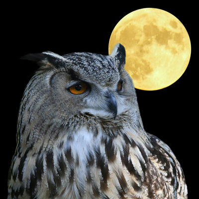 bild_Wise Owl
